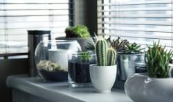 Interior Design - Eco Home Style
