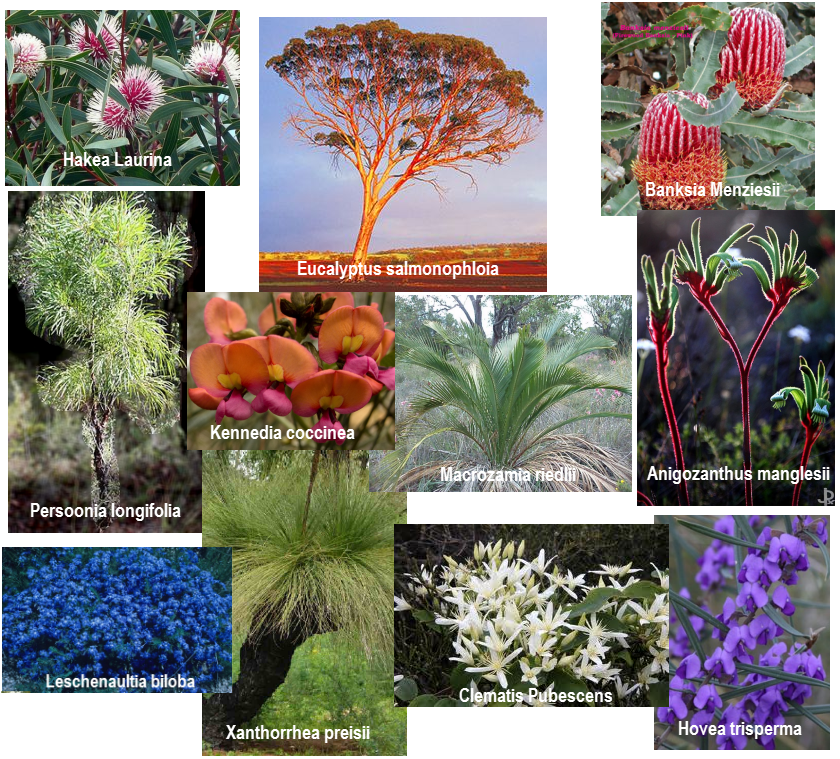 Some of my favourite plants from the Jarrah forest and surrounds.