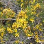 Wildflower garden - Paruna Sanctuary